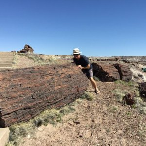 Petrified forest, near the Painted desert and Meteor crater AZ.